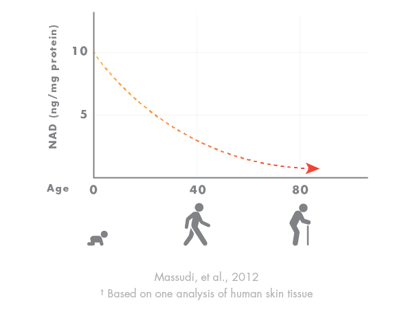 Chart showing how NAD declines with age